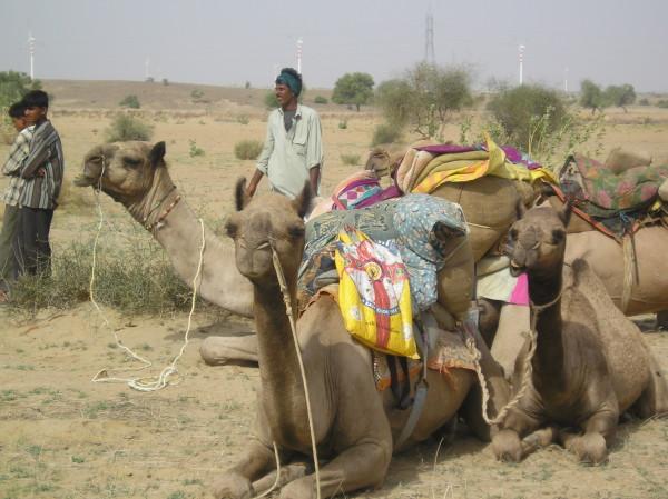 Désert du Thar, pas à pas avec les dromadaires
