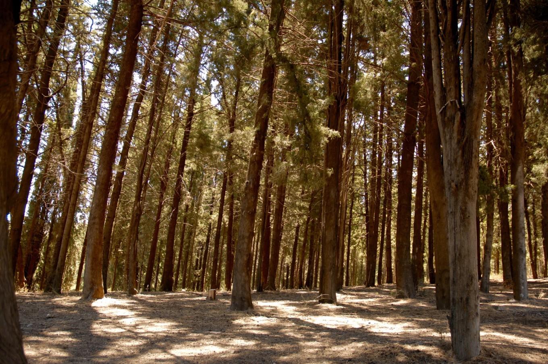 Forêt Plaka, Kos, Grèce