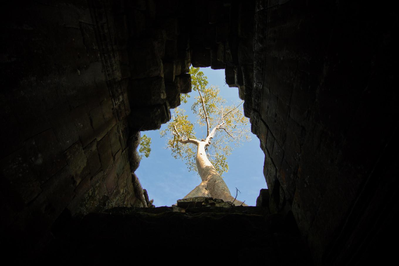 Arbre du Ta Prohm, Siem Reap, Cambodge