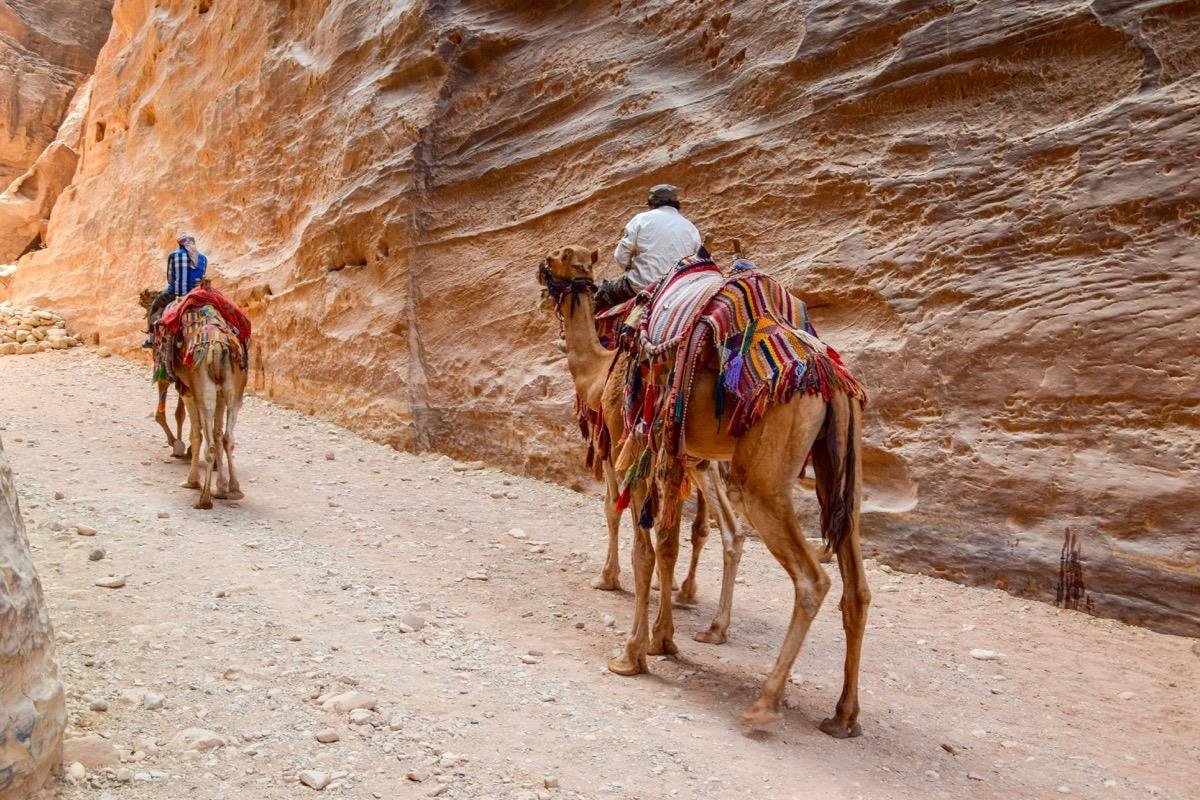 Dromadaires, Petra
