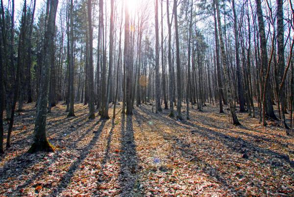 La forêt de Bialowieza, voyage au coeur de la Pologne