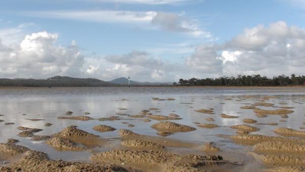 Carnet de voyage d'un roadtrip tasman : de Devonport à Lilydale (1)
