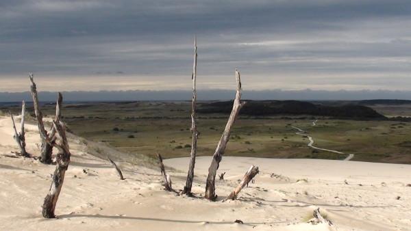 Carnet de voyage d'un roadtrip tasmanien : de Scottsdale à Musselroe Point (2)