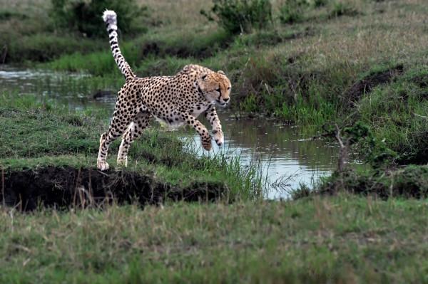 Le Kenya en 10 photos