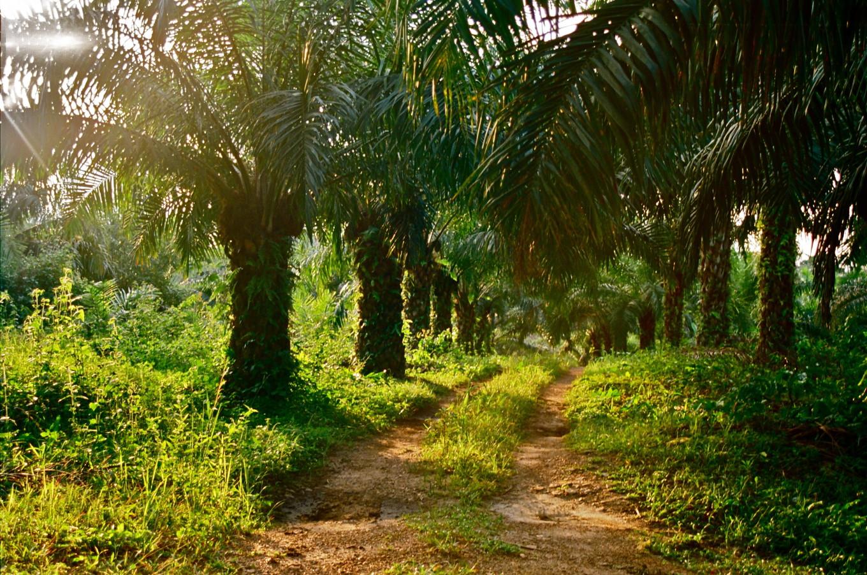 Au bout du chemin - Cameroun