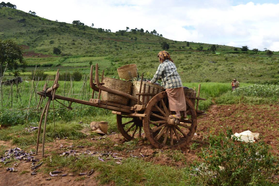 Travaux des champs - Birmanie
