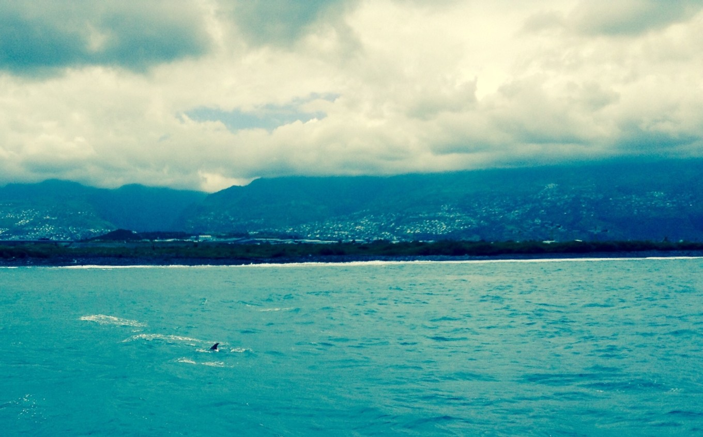 Rencontrer les dauphins, Réunion