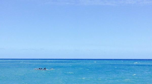 Recontrer les dauphins à la Réunion