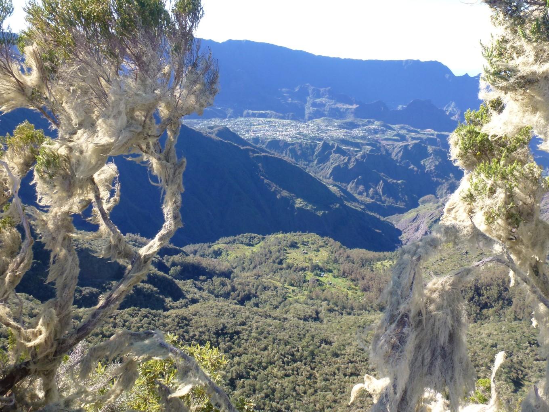 Trois Salazes, Réunion
