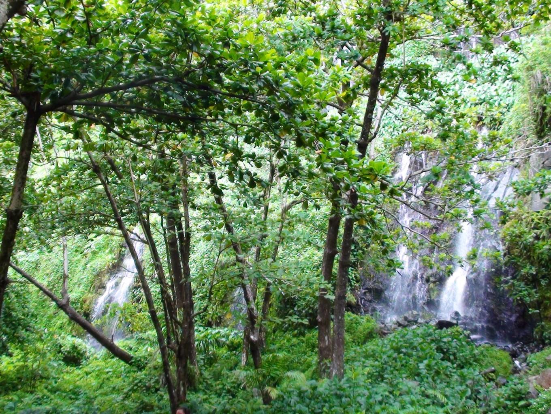 Anse des cascades, Réunion