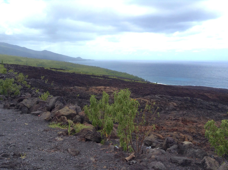 Coulées de lave, Takamaka, Réunion