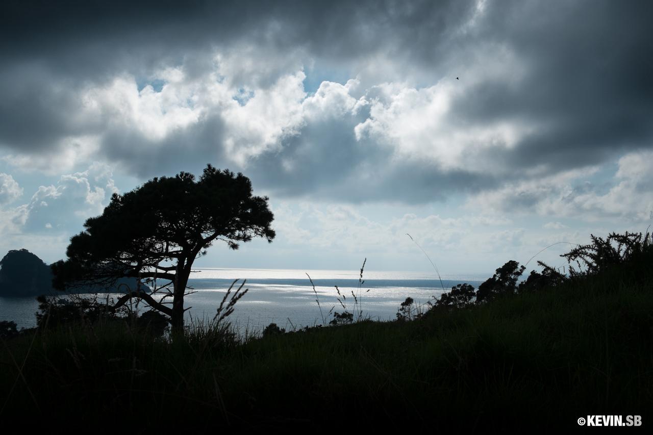 En route vers Cathedral Cove, Nouvelle-Zélande