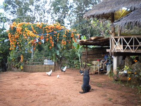 Revenir à l'essentiel en pays Akha, Thaïlande