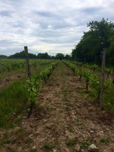 Faire une immersion dans le monde du vin (+700 euros), Savennières, France