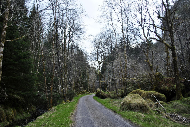 Perdu en pleine forêt - Ecosse Higlands