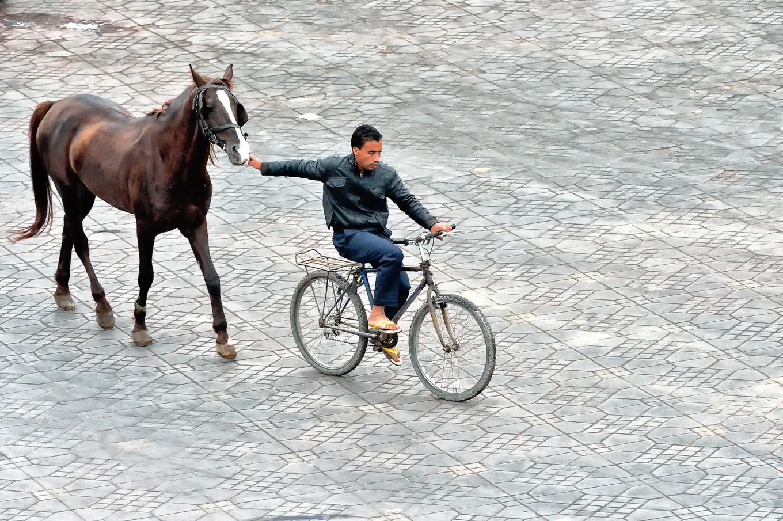 cheval Maroc tiré par un vélo