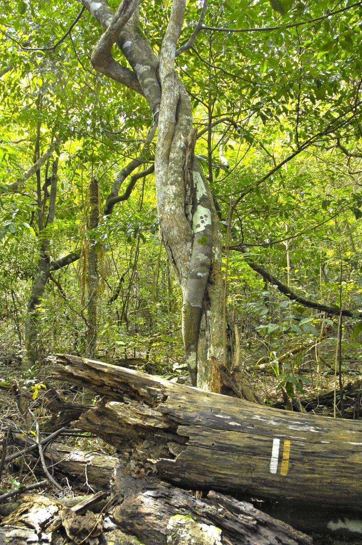 Dans la forêts des cycas, Bourail, Nouvelle-Calédonie
