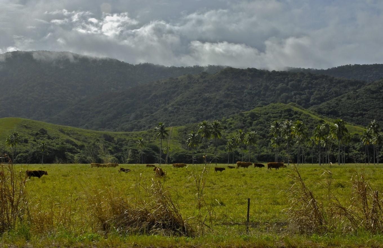 Dans les ranchs de Bourail, Nouvelle-Calédonie