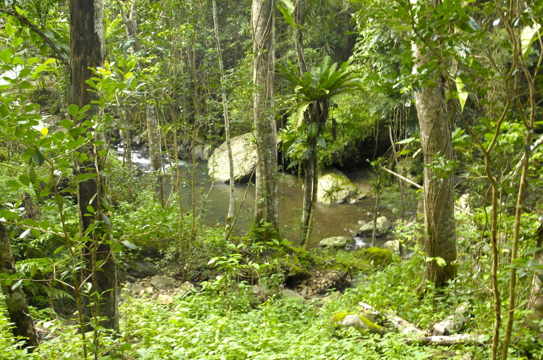Au bord de la rivière, Sarraméa, Nouvelle-Calédonie
