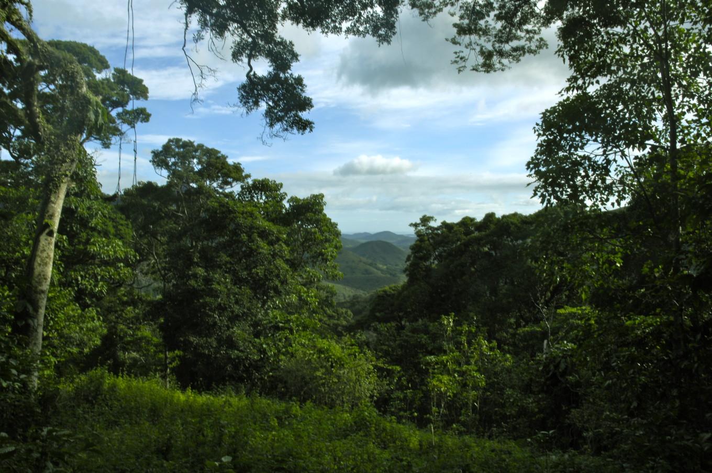 Entre les caféiers, Sarraméa, Nouvelle-Calédonie