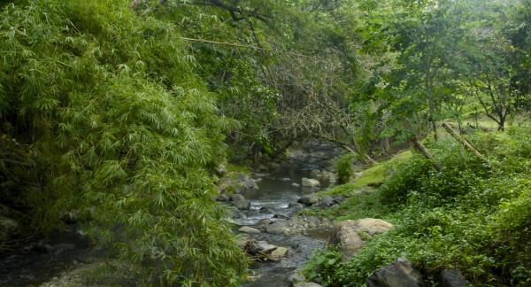 Au bord de la rivière, Bourail, Nouvelle-Calédonie