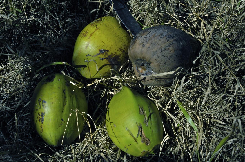 La râpe des cocos, Poindimié, Nouvelle-Calédonie