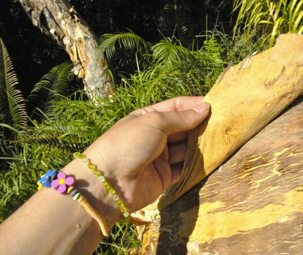 Ecorce de niaouli, Poindimié, Nouvelle-Calédonie