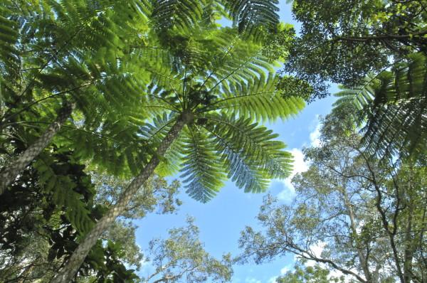 Sur le sentier du Koyaboa, Poindimié, Nouvelle-Calédonie