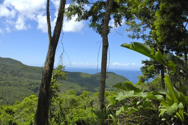 Vue des hauteurs de Pointe Noire, Guadeloupe