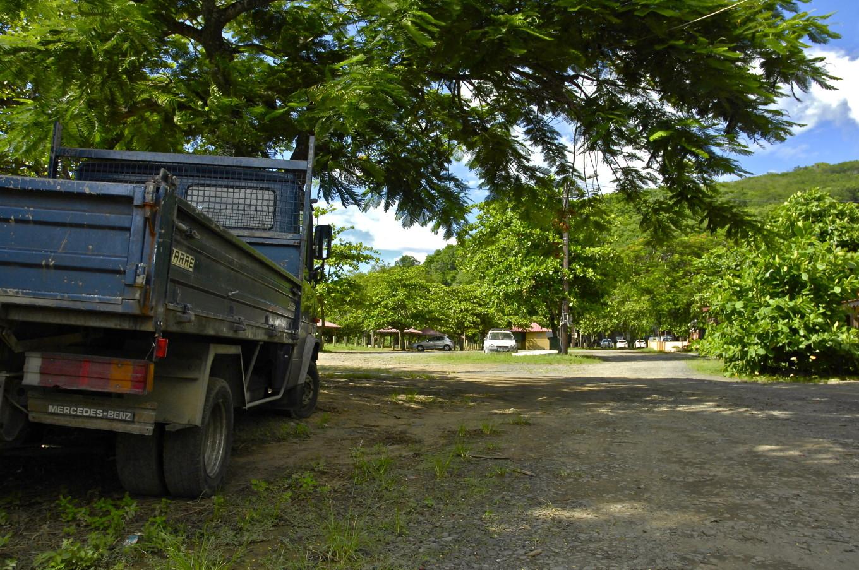 Sous les résiniers Guadeloupe