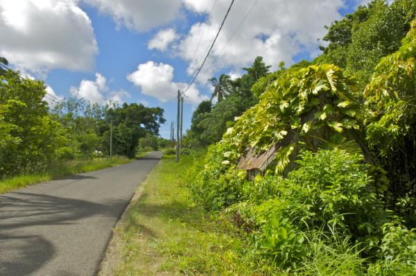 Cabane d'esclave, Marie-Galante, Guadeloupe