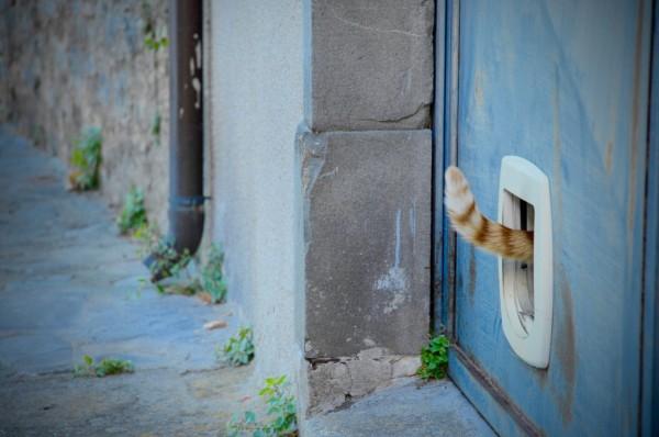 Quand le chat n'est pas là, Coreglia Anteminelli, Italie