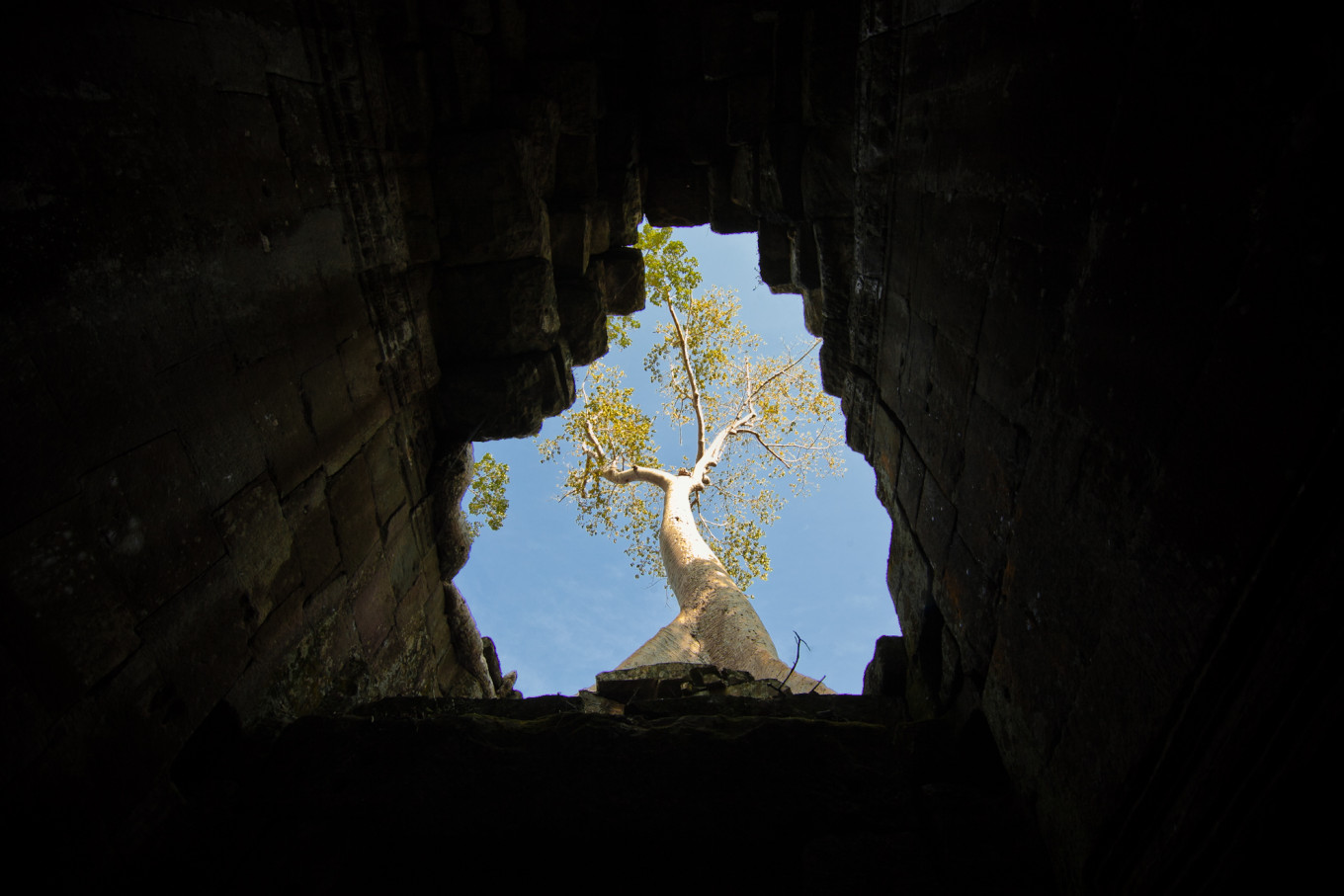 Ta Prohm, Siem Reap, Cambodge