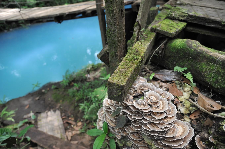 Aux abords du Rio Céleste, Costa Rica