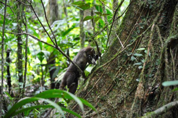 Au rythme de la forêt, Parc Tenorio, Costa Rica