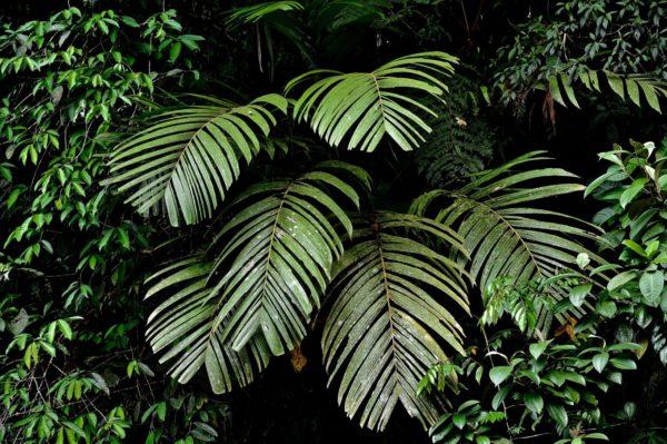 Flore du parc Tenorio, Costa Rica