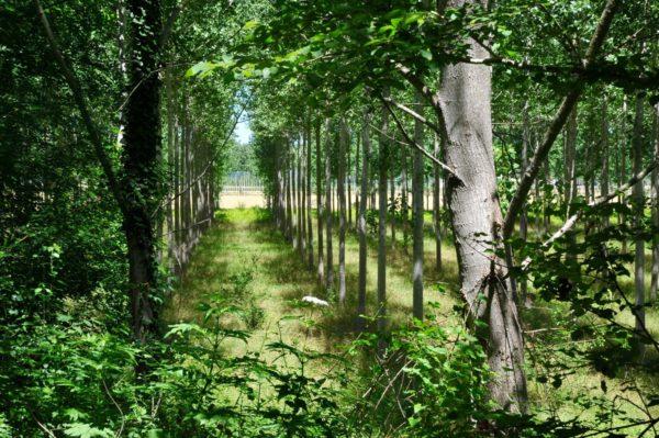 Sérignac sur Garonne forêts