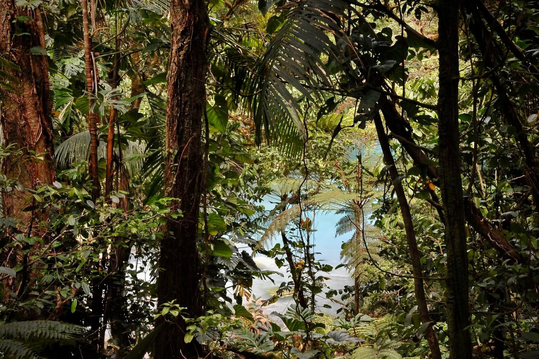 Entre les branchages, le Rio Celeste
