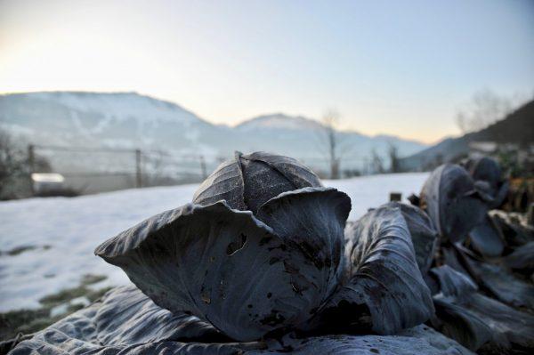 Choux dans la neige, décor de la Fontaine d'Argence, Habère-Poche