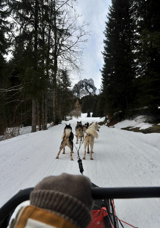 Initiation conduite de chiens de traîneaux, Alpes du Léman