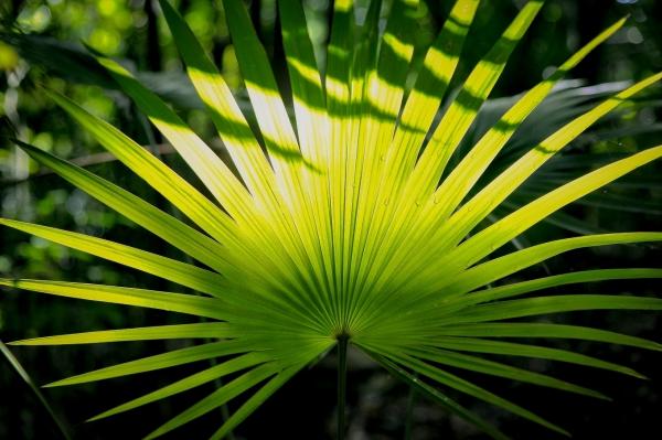 flore-muyil-quintana-roo