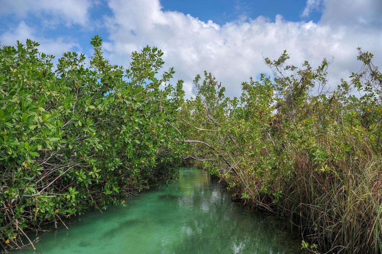 mangrove sian kaan mexique