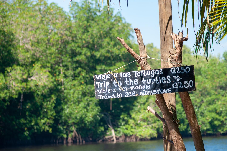 Tour durable autour des tortues marines du Guatemala