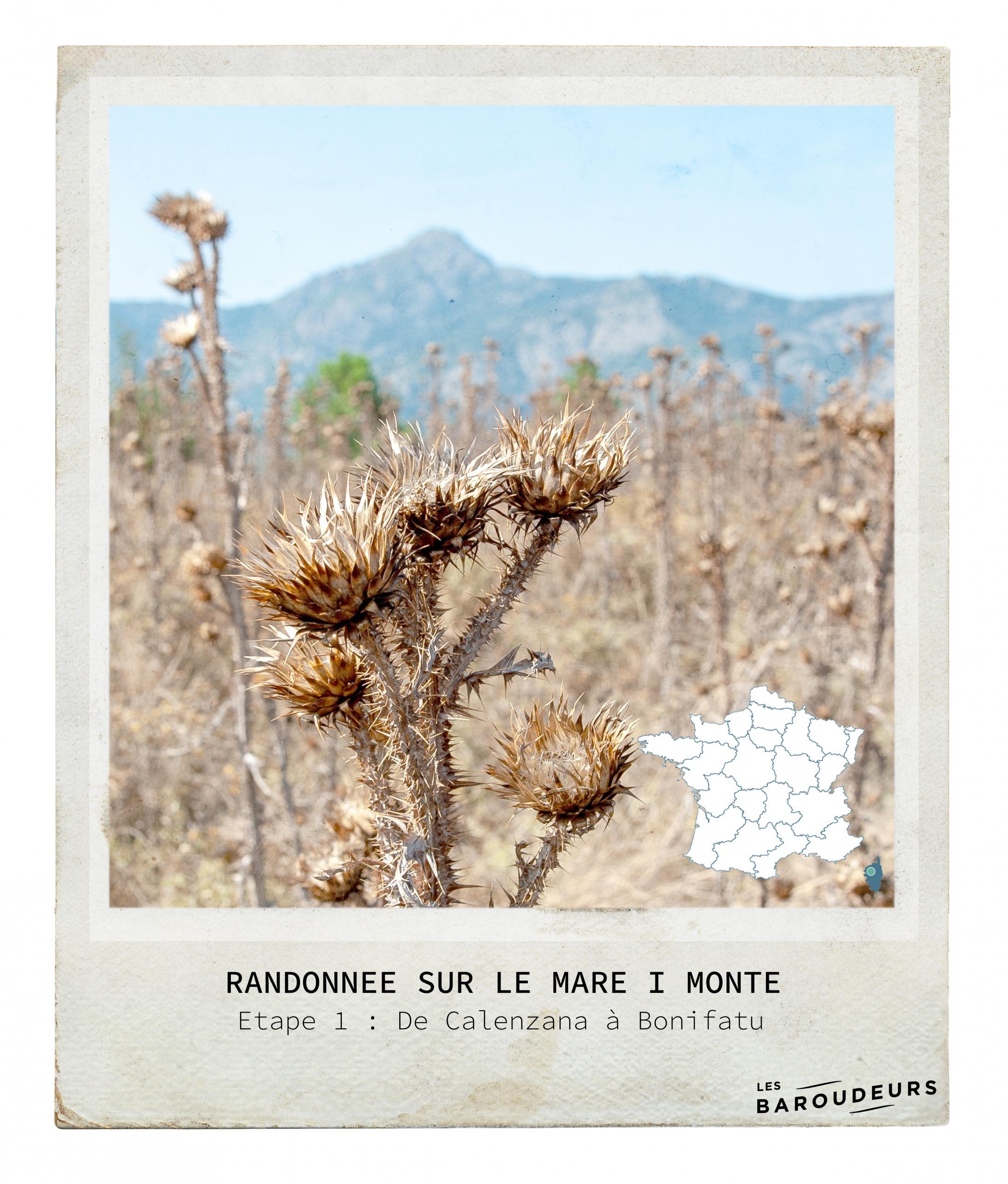 Mare i Monte Corse