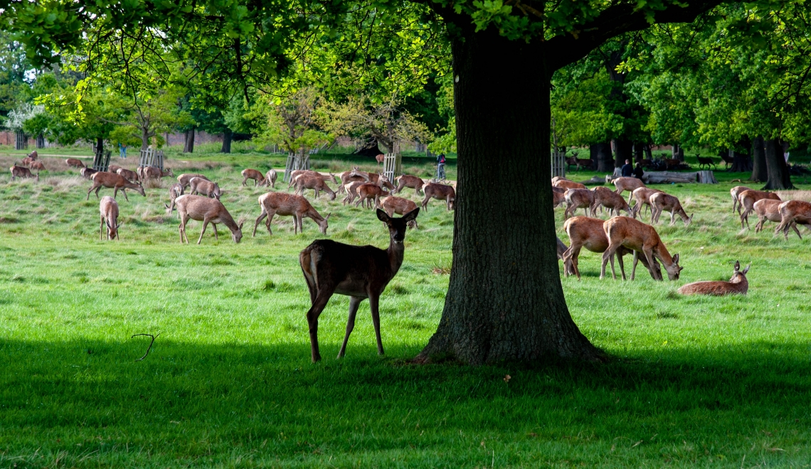 Richmond Park, Londres